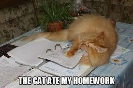 cate-homework